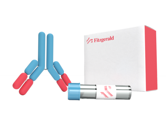 Fitzgerald Industries International Rabbit anti-KAD5 antibody, polyclonal SKU:70R-32245 package