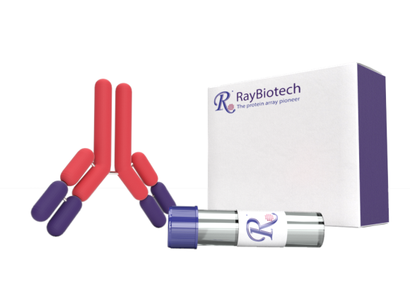 RayBiotech Mouse Anti-Human CREB1 package