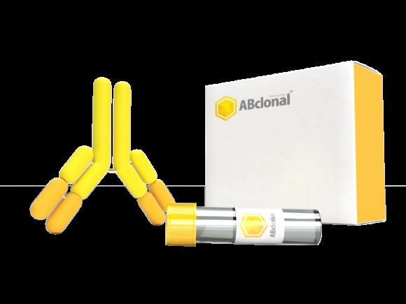 ABclonal SRSF3 Polyclonal Antibody SKU: A6067 package