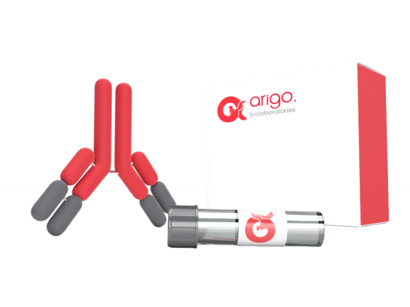Arigo Anti-CD20 (APC), clone B-Ly1 SKU: ARG21277 package