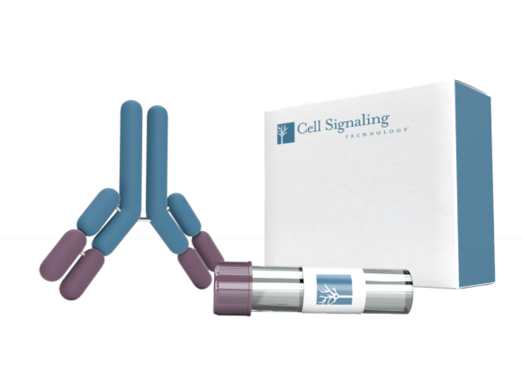 Cell Signaling Technology SMC2 (D11F9) Rabbit mAb package