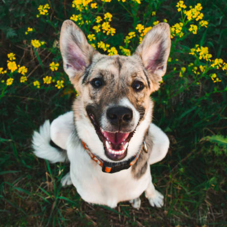How to Start a Dog Rescue