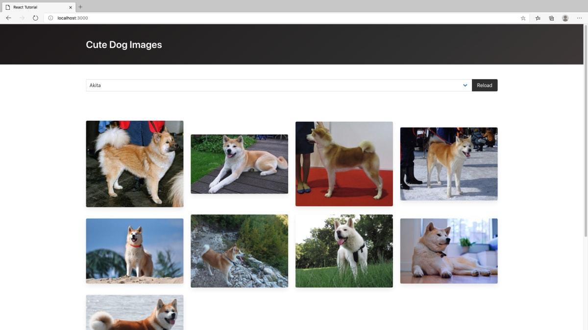 犬画像ギャラリーの完成