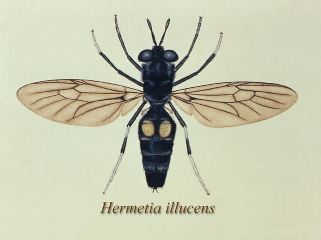 Are Black Soldier Flies Good Compost