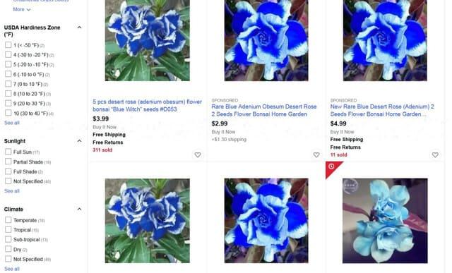 Blue Adenium Desert Rose Flowers: Real or Scam?