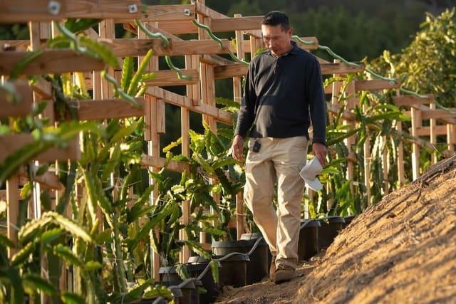 How to build a dragon fruit trellis: DIY ideas guide