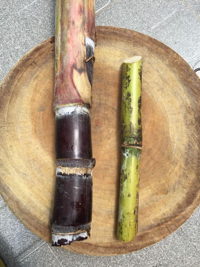 Comparing purple and green sugarcane varieties