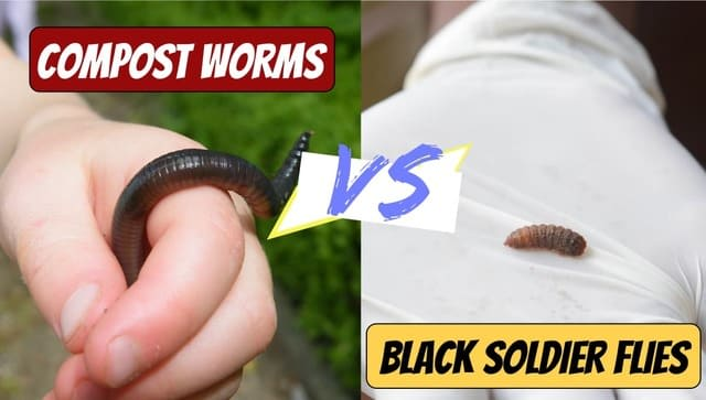 Compost Worms vs Black Soldier Flies: Compare & Contrast