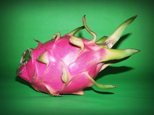 Dragon Fruits Dropping? Here's Why