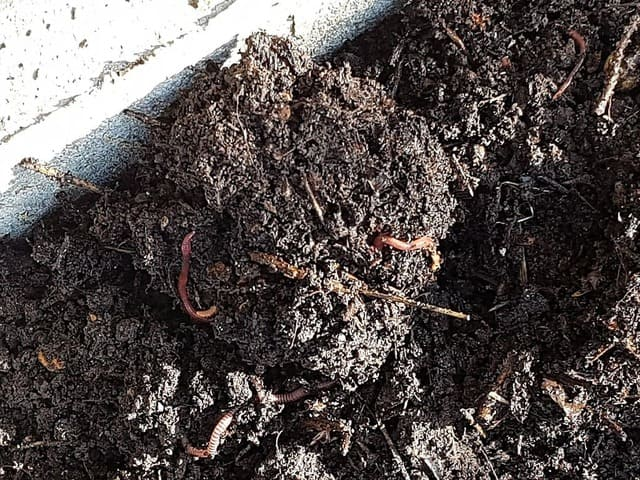 How to Know if Your Worms Are Happy