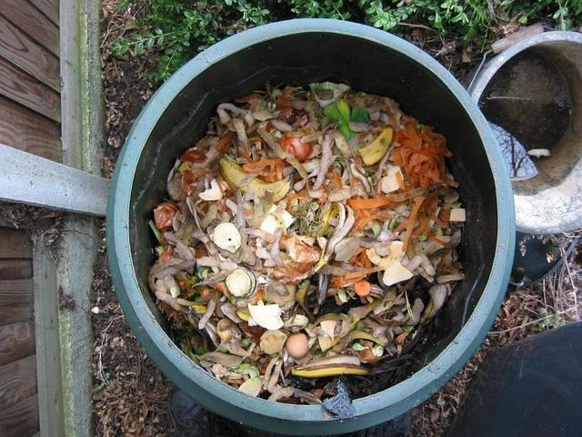 How to Compost Indoors Without Worms: One Easy Way