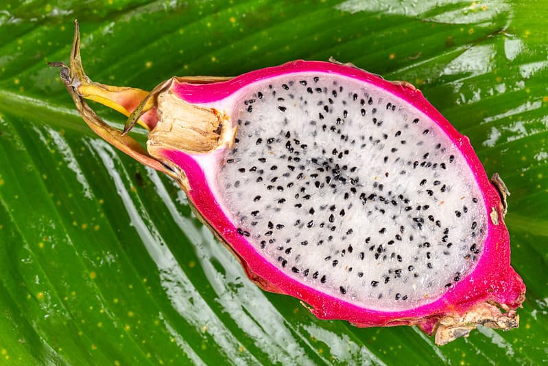 How to grow sweeter, more flavorful dragon fruits