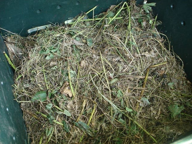 Are Maggots Okay to Have in A Compost?