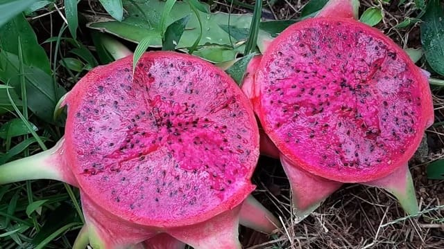 What Color Is Dragon Fruit Inside