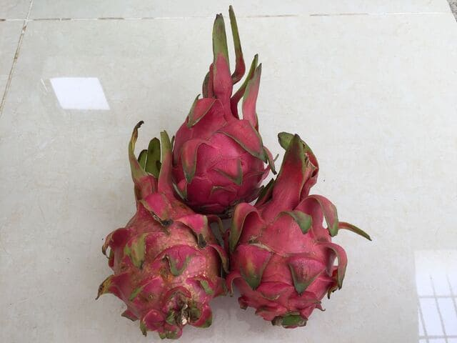 Why Do They Call It Dragon Fruit: Short Story