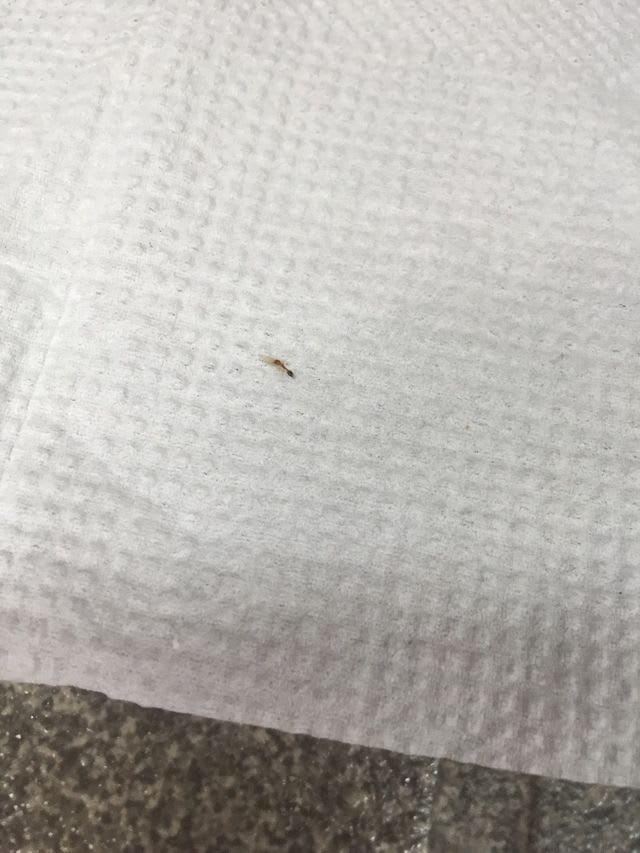 Ants Attacking BSF Egg & Hatchlings: What to Do