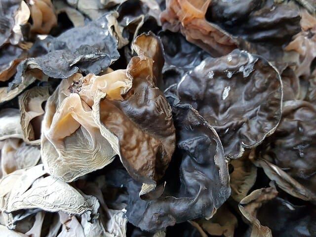 Growing Wood Ear Mushroom On Logs: 3 Steps