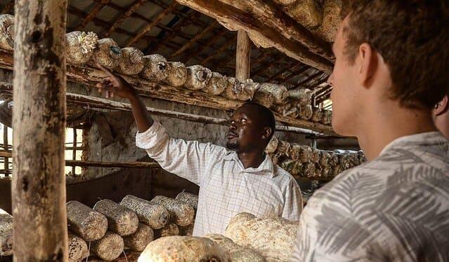 Starting A Mushroom Farm: A Few Things To Note