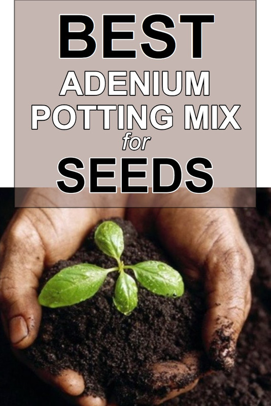 best-potting-mix-for-adenium-seeds