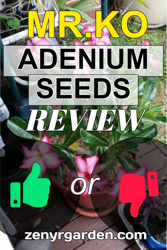 mr-ko-adenium-seeds-review