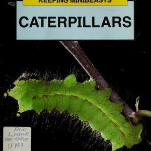 Caterpillars (Keeping Minibeasts)
