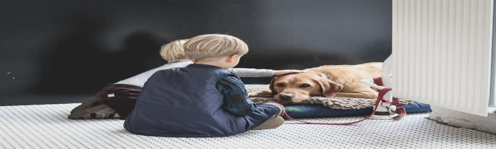 4 Absolutely Valuable Signs To See if Your Child Can Handle a Pet
