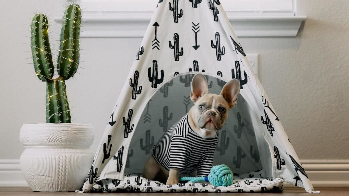 image of a small dog sitting a tent next to a cactus