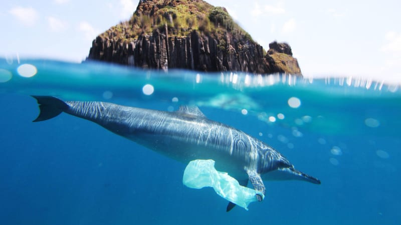 Dolphin with plastic bag