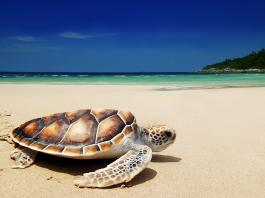 Sea Turtles in Turkey Sailing holiday Zizoo