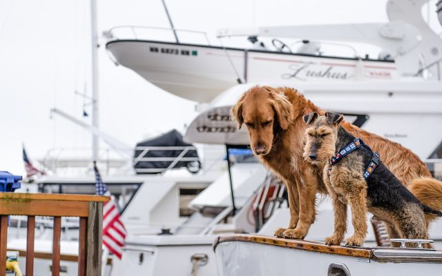 Guest Post: Boating with your dog