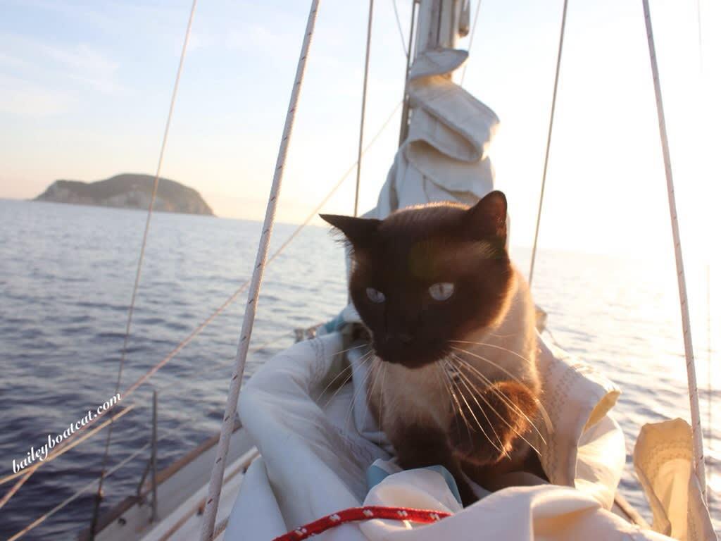 Segeln mit Katzen