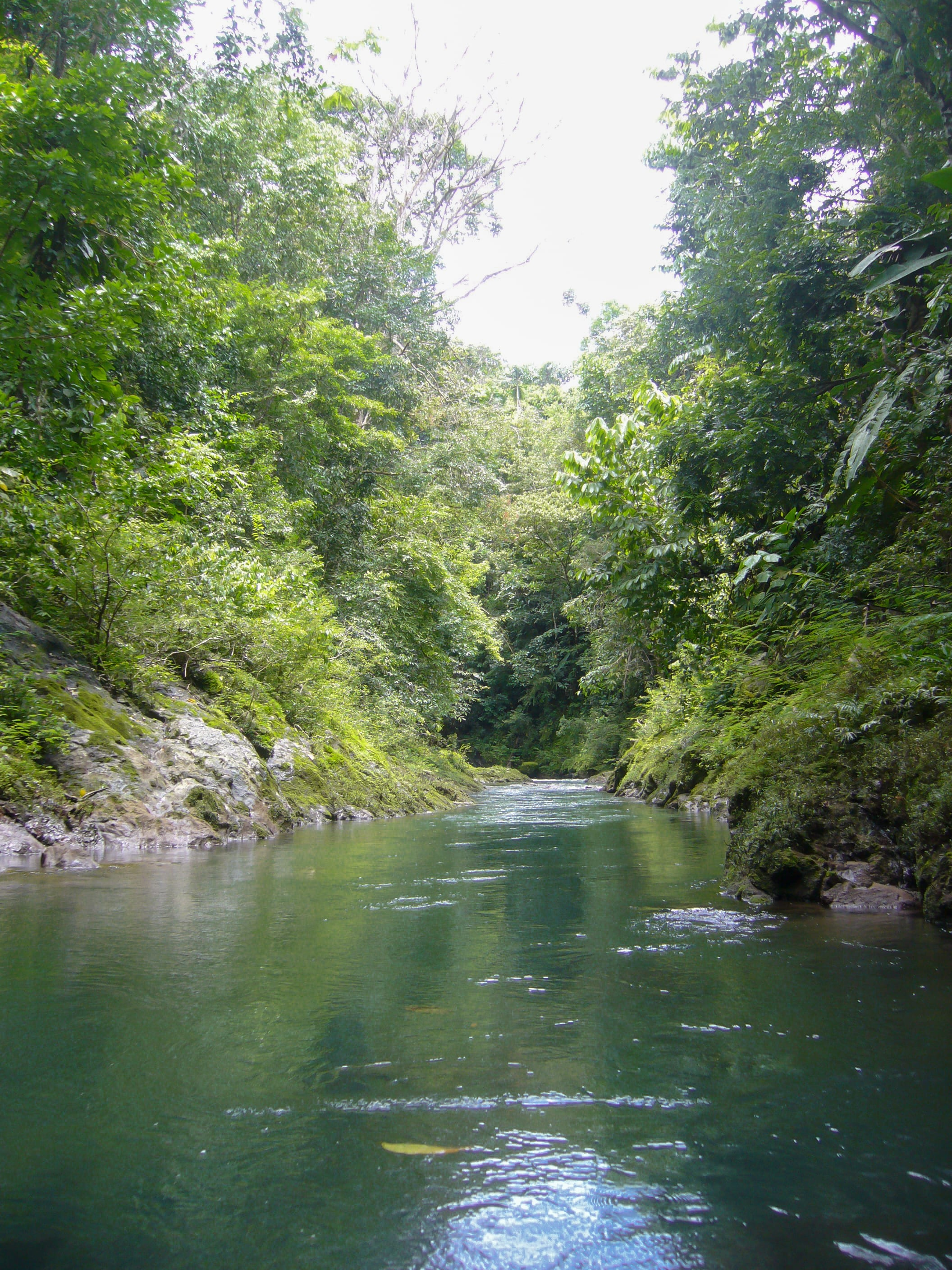 river jungle Bahia Drake