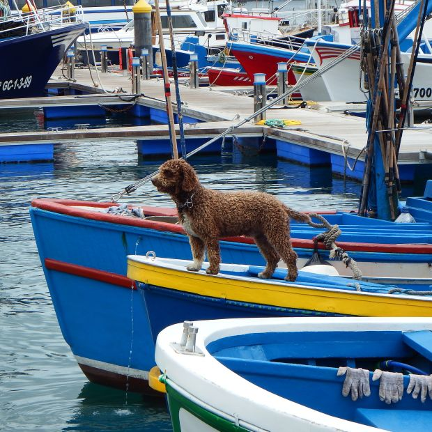 Tips for taking your dog on a boat