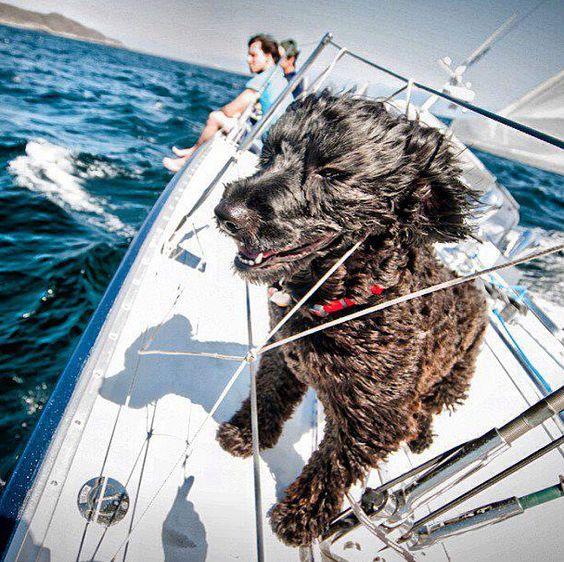 Segeln mit Haustieren: Alles, was Sie wissen müssen