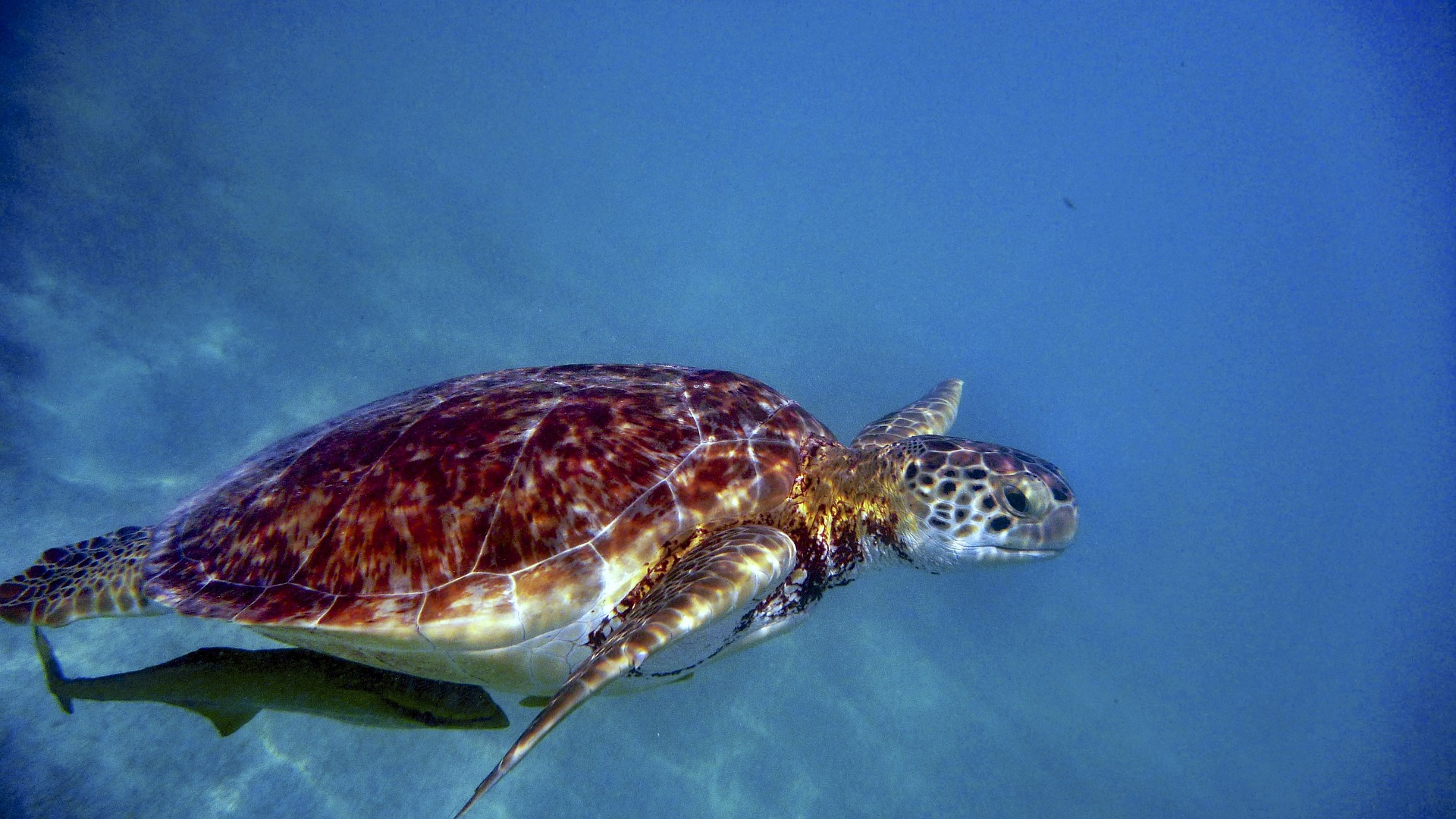 water-turtle-958981_1920