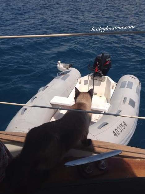 dinghy day trips