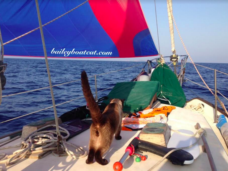 yacht charter check-in