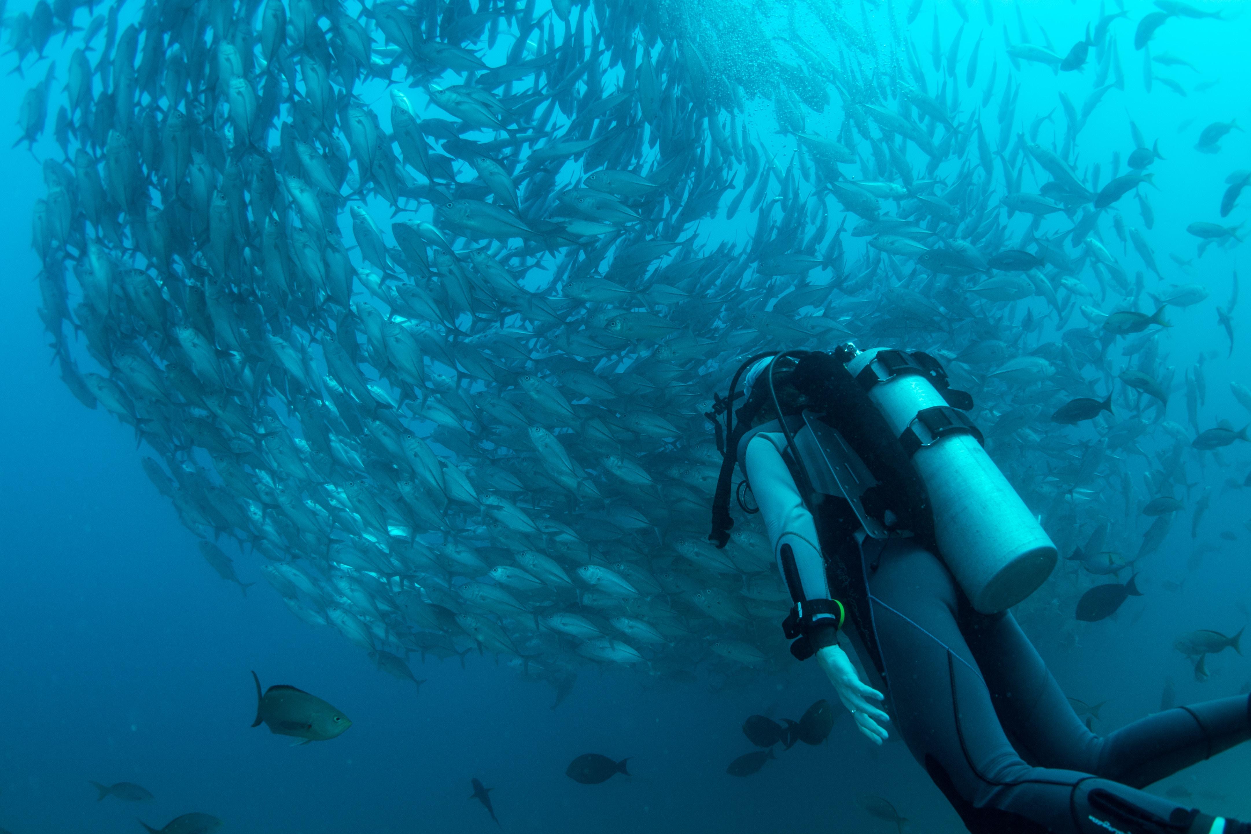 scuba diving boat trip