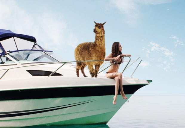 alpaca travelling on a boat with a girl