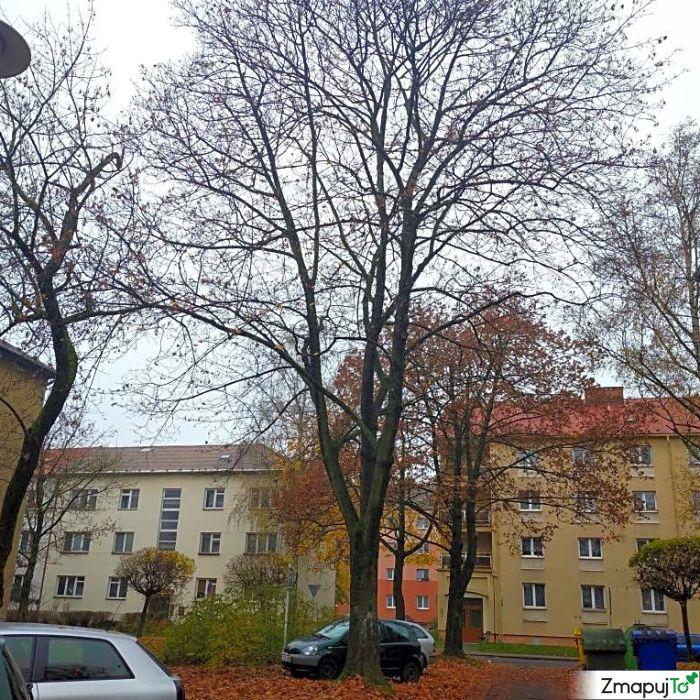 ZmapujTo.cz - hlášení číslo 174186, Závada na veřejné zeleni, Hrabová