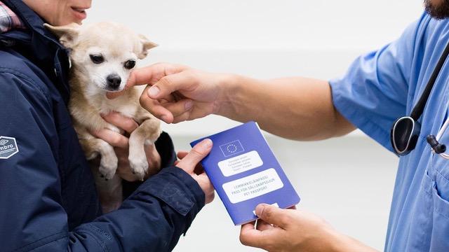 Pass för husdjur